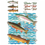 Fish (trout)