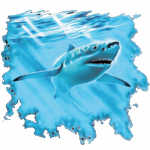 Shark (Great White)