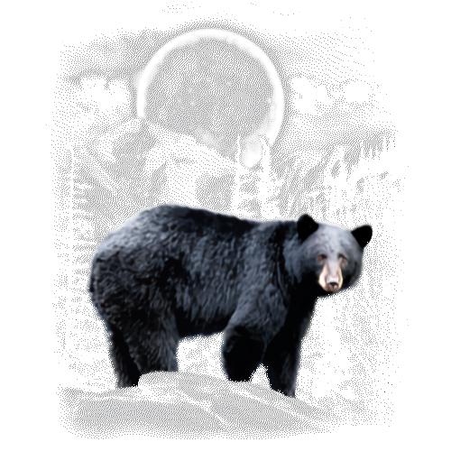 Bear (Black Bear Wilderness and Moon)