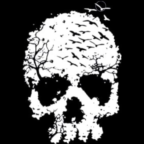 Skull (Birds/Crows)