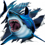 Shark (Rip out)