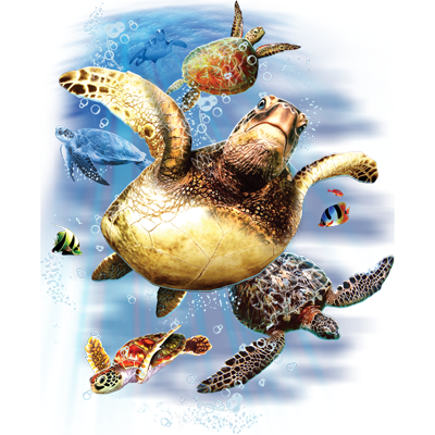 Turtles (tropical)