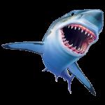 Sharky Large