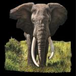 Elephant (Gray)