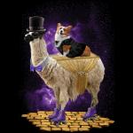 Corgi Express (Llama)