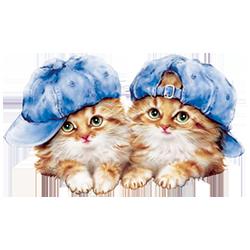 Kitten Pair