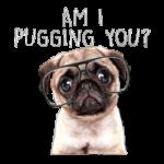 Am I Puggin You