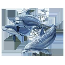 Dolphins (Three)