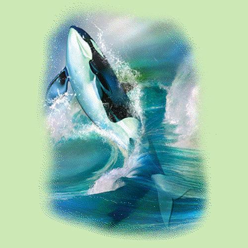 Orca Breakthrough