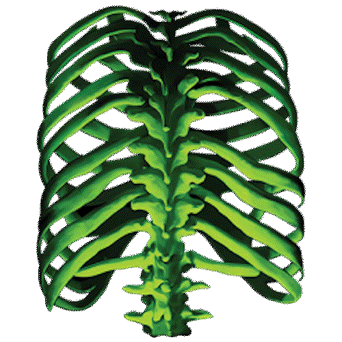 Rib Cage (Glow In The Dark)