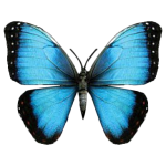 Butterfly (Blue Morpho)