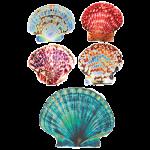 Seashells (Shell Collection)