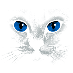 Cat (Blue Eyes Black)